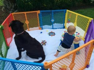 Baby and dog in best baby gear playpen